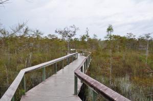 Everglades - Gumbo Limbo Trail
