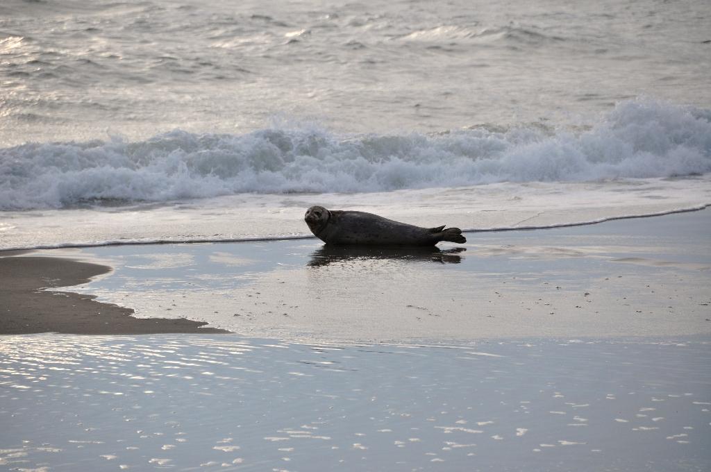Dag 16: Oregon Dunes en Pacifische kust